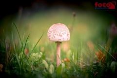 FOTO-EHRLICHwww-0104
