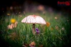 FOTO-EHRLICHwww-0109