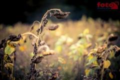 FOTO-EHRLICHwww-0115