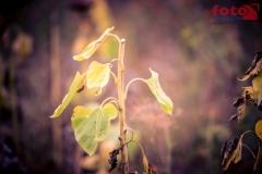 FOTO-EHRLICHwww-0120