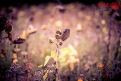 FOTO-EHRLICHwww-0121