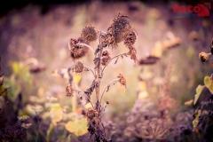 FOTO-EHRLICHwww-0122
