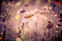 FOTO-EHRLICHwww-0123