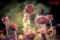 FOTO-EHRLICHwww-0132