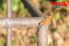 FOTO-EHRLICHweb-0980