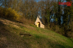 FOTO-EHRLICHw-7386